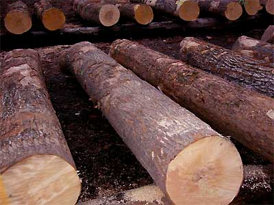 供应缅甸杉木木方进口代理图片