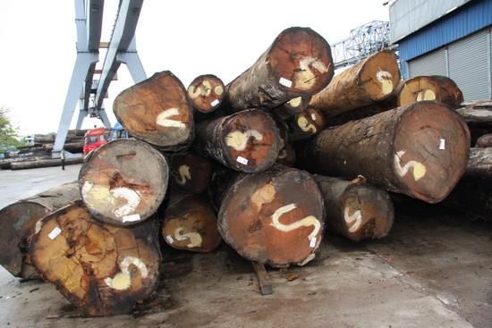 供应美国原木木方进口图片