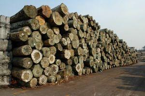 供应非洲奥古曼原木进口代理图片