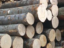 供应专业巴布亚木材进口代理图片