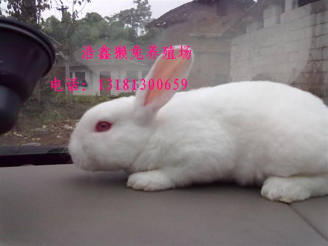 兔子养殖场图片设计图纸展示