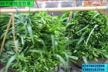 供应皇竹草种节