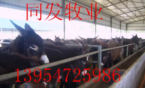 肉驴养殖场