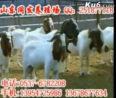 供应云南种羊场-云南波尔山羊养殖场
