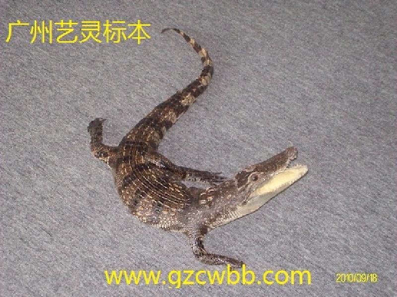 供应动物标本6