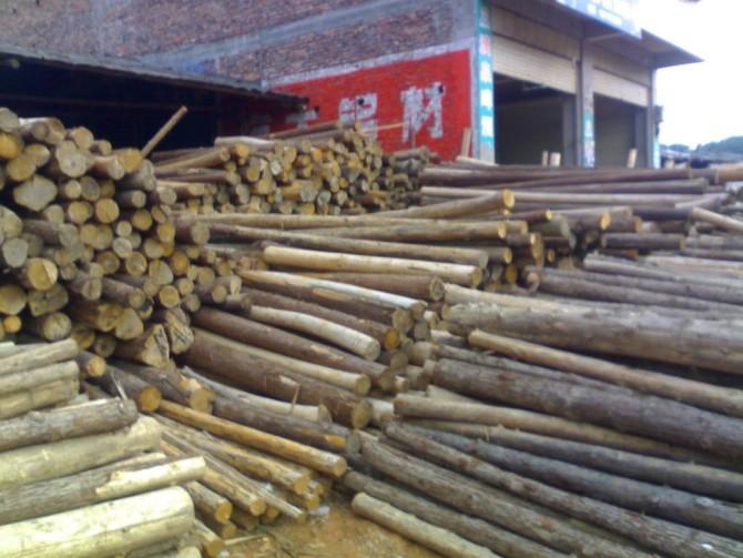 杉木原木图片