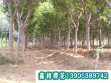 供应山东绿化苗木