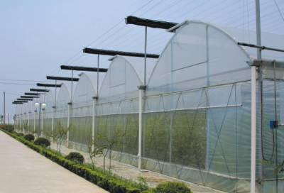 供应阳光板农业温室阳光板大棚温室