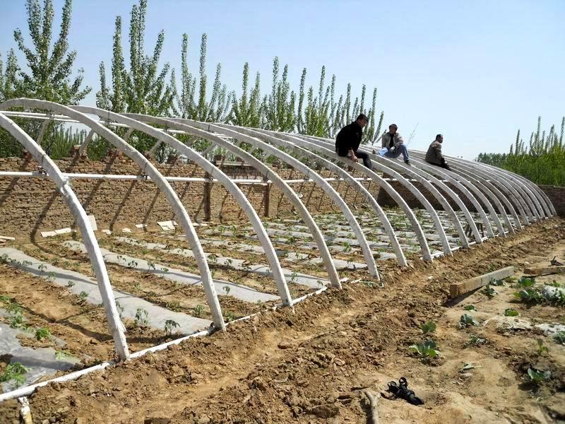 葡萄种植可行性_塑料大棚栽培_塑料大棚栽培设计