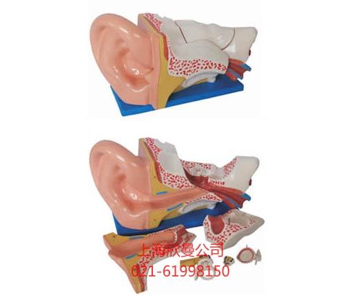 耳解剖模型图片