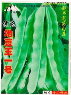 供应地豆王一号种子