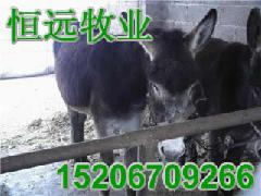 驴鞭的长度图片 日本图片下载 吃驴鞭真的可以延长爱爱时