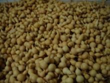 供应天然原料葫芦
