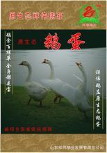 供应原生态商品鹅蛋