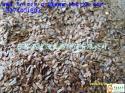柳杉种子图片
