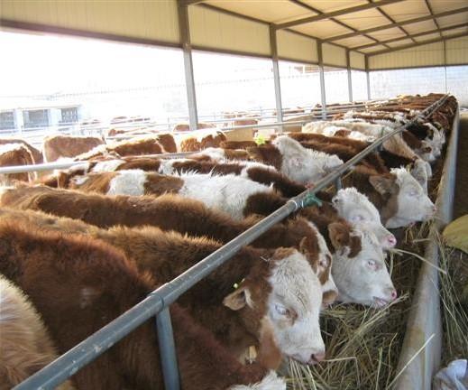 山东重山牛羊马驴农牧业合作社