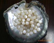 供应中国贝珠核 珠核 珍珠核 养殖珠核 贝珠核 圆珠 贝壳珠