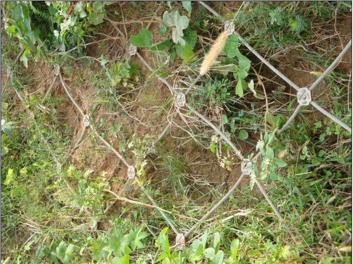 自然灾害防护产品主动防护网-尽在河北安邦批发