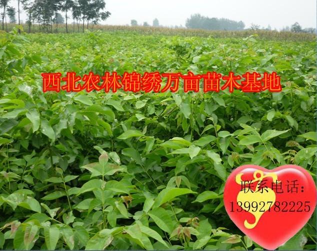 陕西鸿盛瑞农林科技有限公司销售部