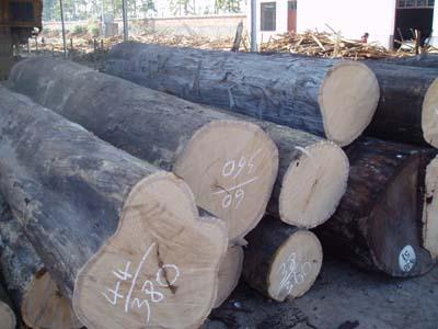 供应缅甸柚木进口报关代理东莞木材进图片