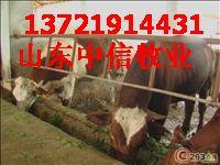 供应肉牛繁殖