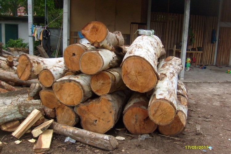 供应专业非洲木材进口报关代理图片